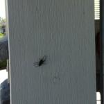 big spider in my garage