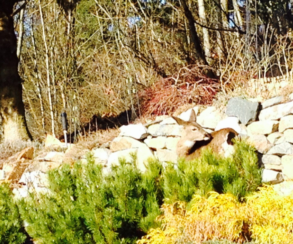 deer winter 1