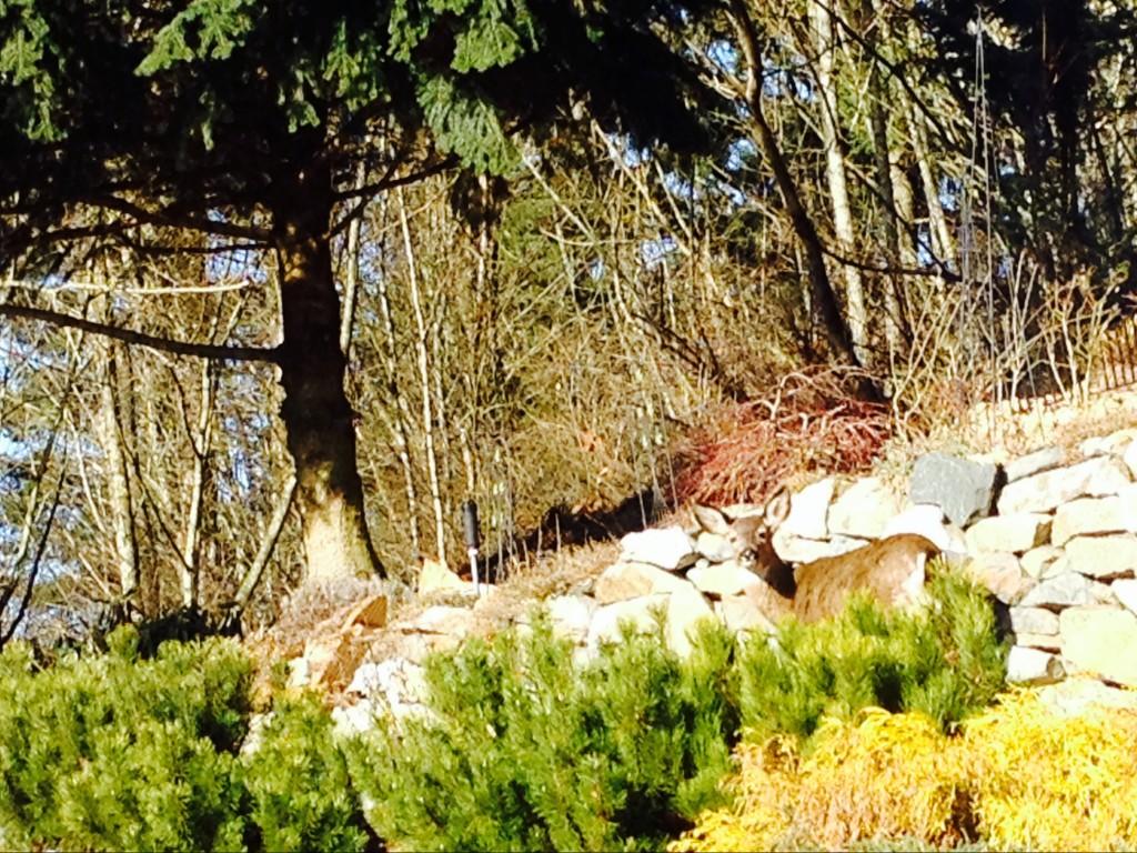 deer winter 2