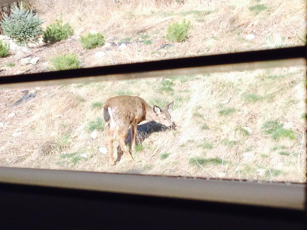 deer winter 5