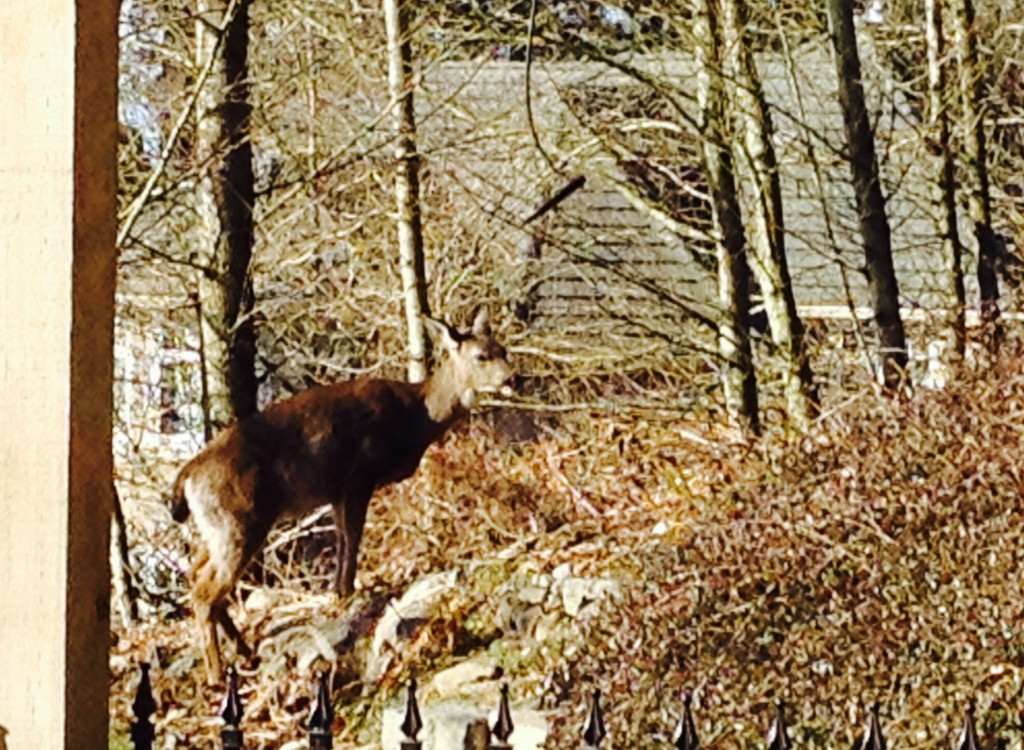deer winter mama 2