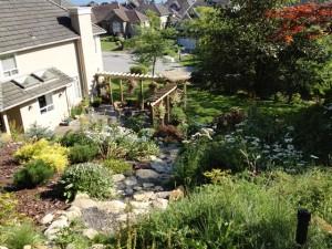Outdoor yard in summer